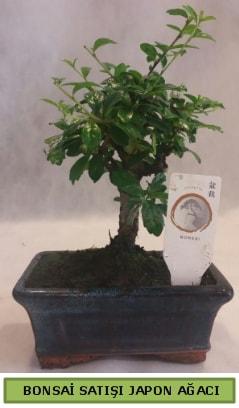 Minyatür bonsai ağacı satışı  Muğla cicek , cicekci