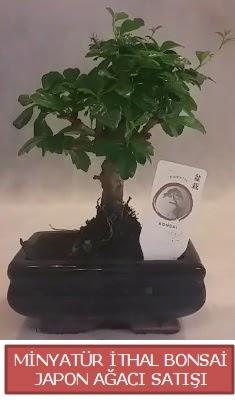 Küçük görsel bonsai japon ağacı bitkisi  Muğla 14 şubat sevgililer günü çiçek