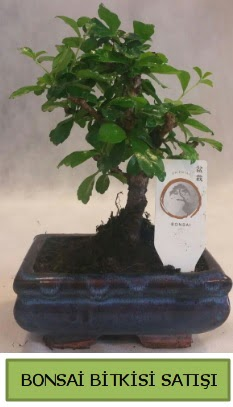 Bonsai ithal görsel minyatür japon ağacı  Muğla anneler günü çiçek yolla