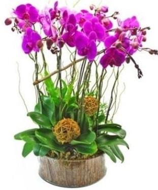 Ahşap kütükte lila mor orkide 8 li  Muğla çiçek mağazası , çiçekçi adresleri