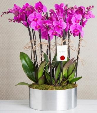 11 dallı mor orkide metal vazoda  Muğla çiçek siparişi vermek