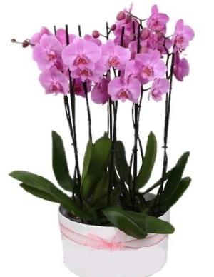 Beyaz seramik içerisinde 7 dallı mor orkide  Muğla cicekciler , cicek siparisi