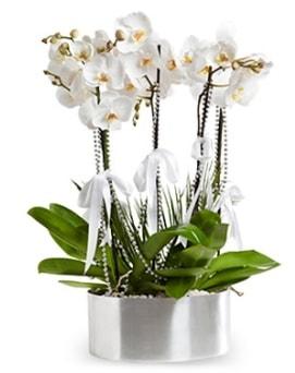 Beş dallı metal saksıda beyaz orkide  Muğla online çiçek gönderme sipariş