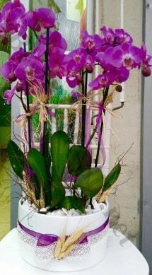 Seramik vazoda 4 dallı mor lila orkide  Muğla online çiçekçi , çiçek siparişi