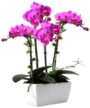 Seramik vazo içerisinde 4 dallı mor orkide  Muğla uluslararası çiçek gönderme