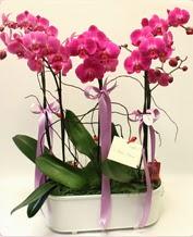 Beyaz seramik içerisinde 4 dallı orkide  Muğla anneler günü çiçek yolla