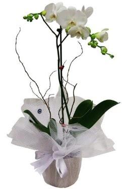 Tek dallı beyaz orkide  Muğla çiçek yolla , çiçek gönder , çiçekçi