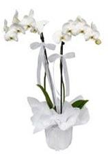 2 dallı beyaz orkide  Muğla çiçekçi mağazası