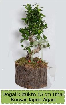 Doğal kütükte İthal bonsai japon ağacı  Muğla cicek , cicekci