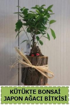 Kütük içerisinde doğal bonsai ağacı  Muğla cicekciler , cicek siparisi