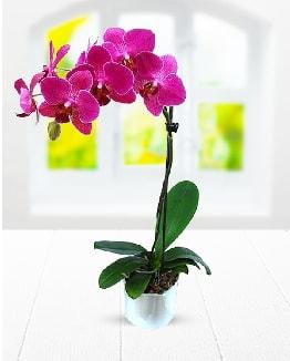 Tek dallı mor orkide  Muğla uluslararası çiçek gönderme