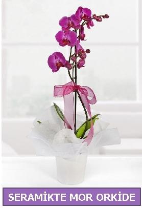 Seramik içerisinde birinci kalite tek dallı mor orkide  Muğla internetten çiçek siparişi