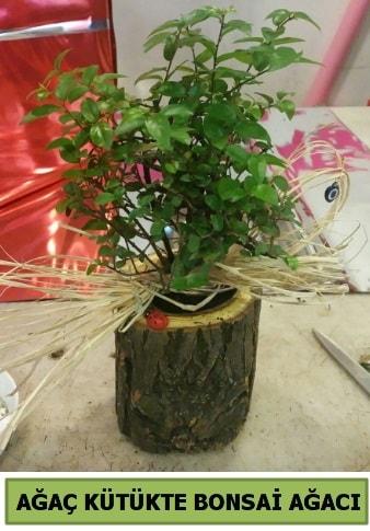 Doğal ağaç kütük içerisinde bonsai ağacı  Muğla çiçek siparişi vermek