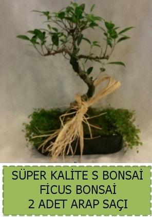 Ficus S Bonsai ve arap saçı  Muğla cicekciler , cicek siparisi