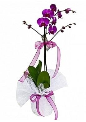 Tekli Mor Orkide  Muğla online çiçek gönderme sipariş