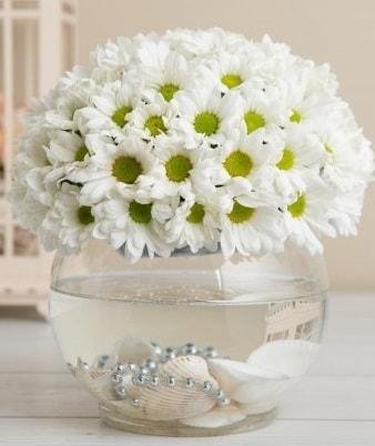 Fanusta beyaz Papatya  Muğla uluslararası çiçek gönderme