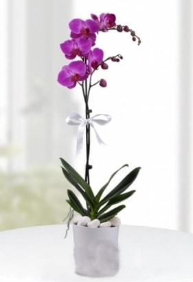Tek dallı saksıda mor orkide çiçeği  Muğla kaliteli taze ve ucuz çiçekler