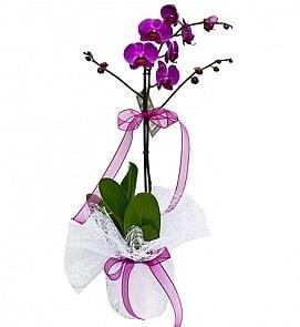 Tek dallı saksıda ithal mor orkide çiçeği  Muğla kaliteli taze ve ucuz çiçekler