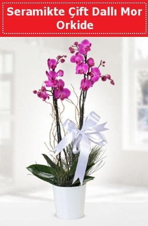 Seramikte Çift Dallı Mor Orkide  Muğla çiçek gönderme