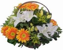 Muğla internetten çiçek satışı  sepet modeli Gerbera kazablanka sepet