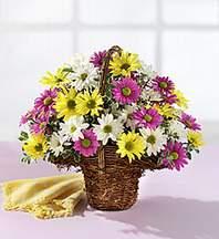 Muğla kaliteli taze ve ucuz çiçekler  Mevsim çiçekleri sepeti